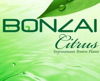 Raeuchermischung Bonzai Citrus 3g